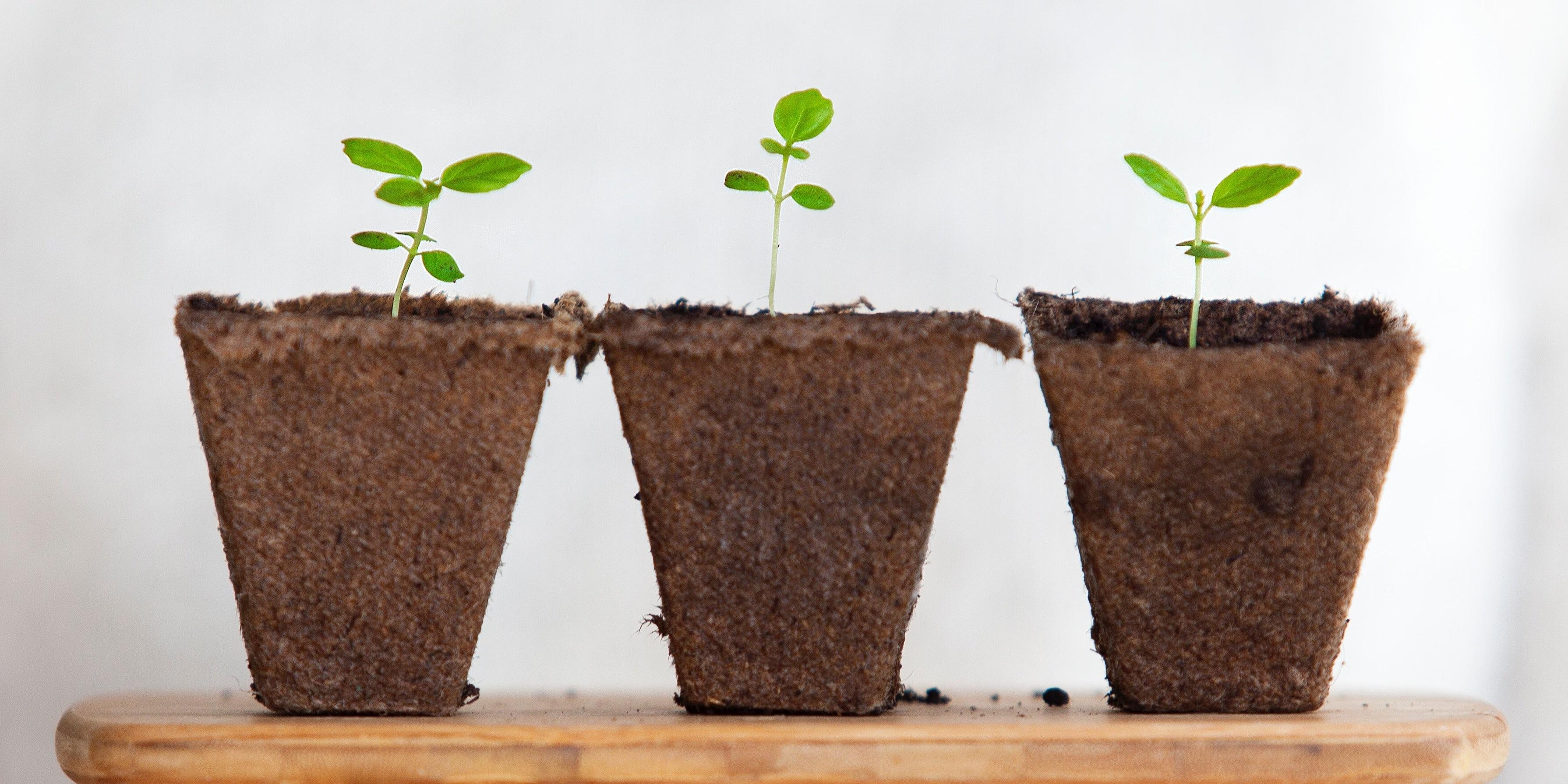 grow-plant-business-652041-edited